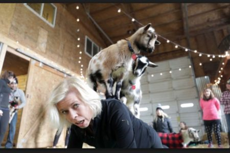 spineful yoga beats goat yoga anyday